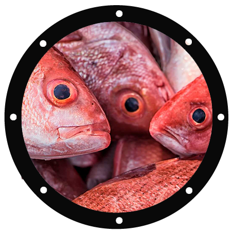 vermillion-snapper-home