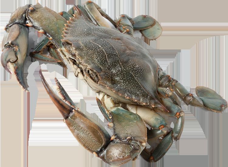 blue-crab-3